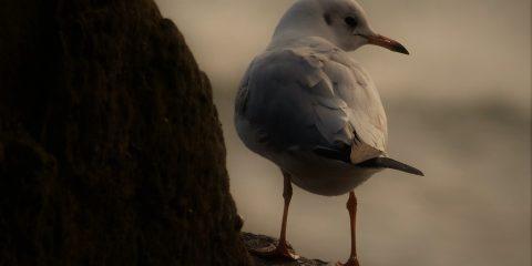 Seagull Abby Park